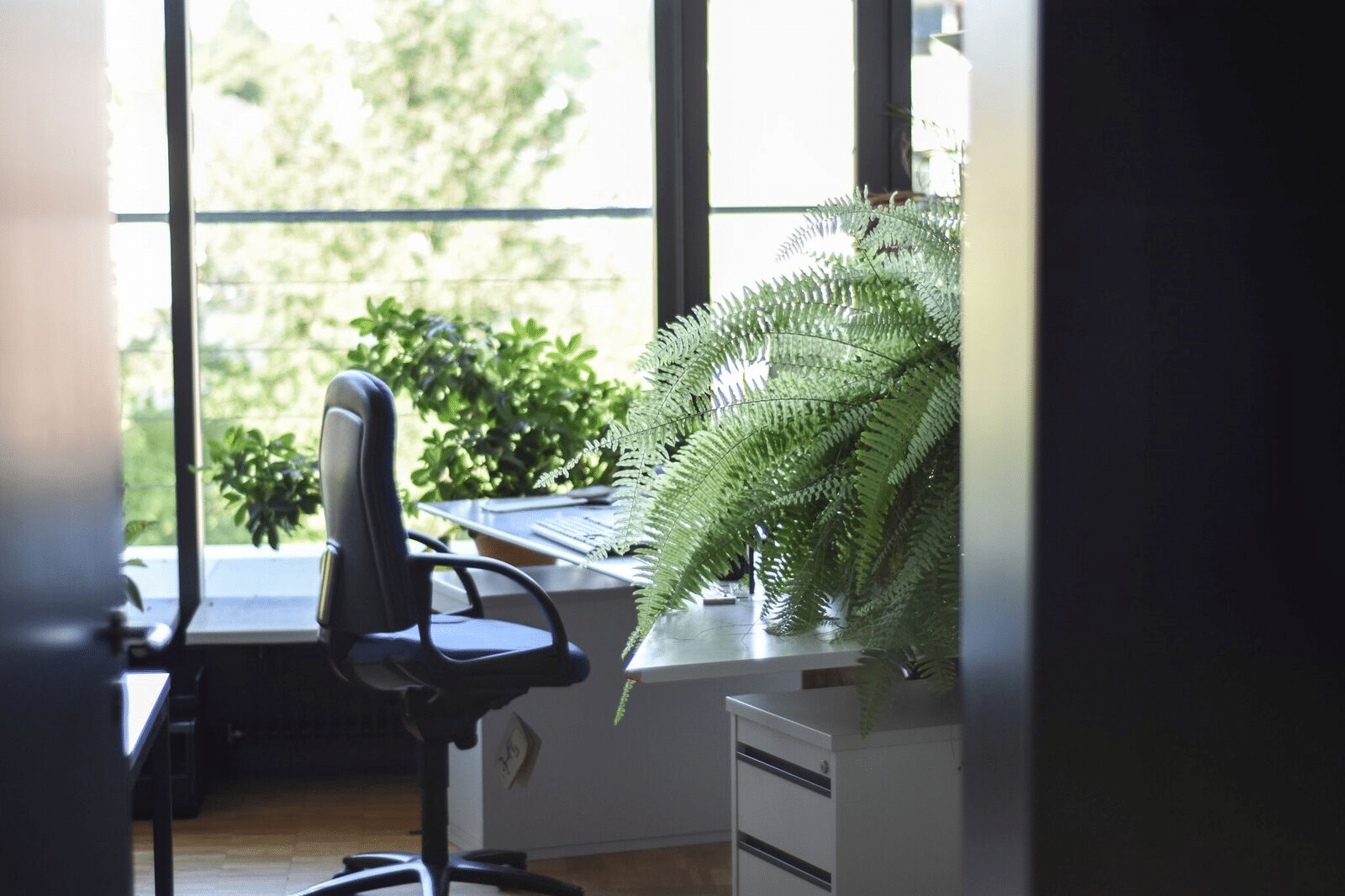 plant on a desk, plants that can improve your health