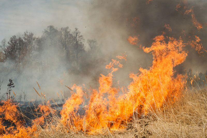 wildfire, prevent wildfire damage to your home